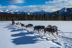 Dog Sledging in Lapland - Northern Lights Tours